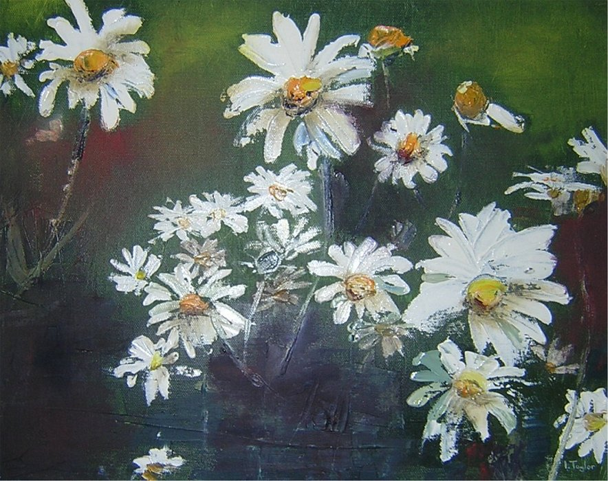 Marguerites by Irene Taylor