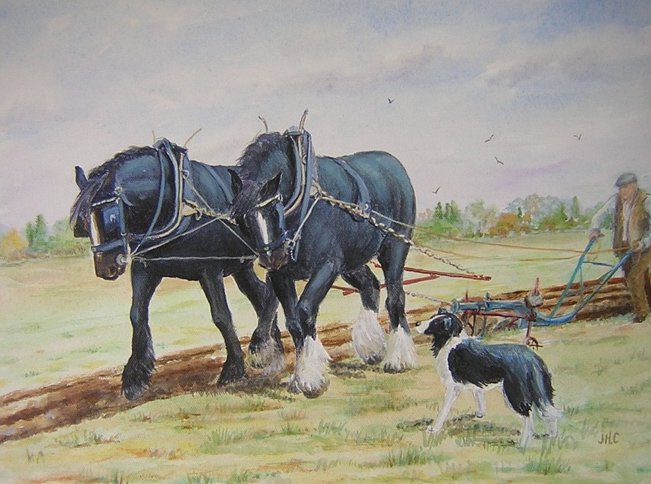 Ploughing 9
