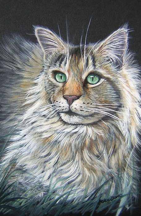 Maine Coon Study