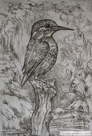 Kingfisher Drypoint