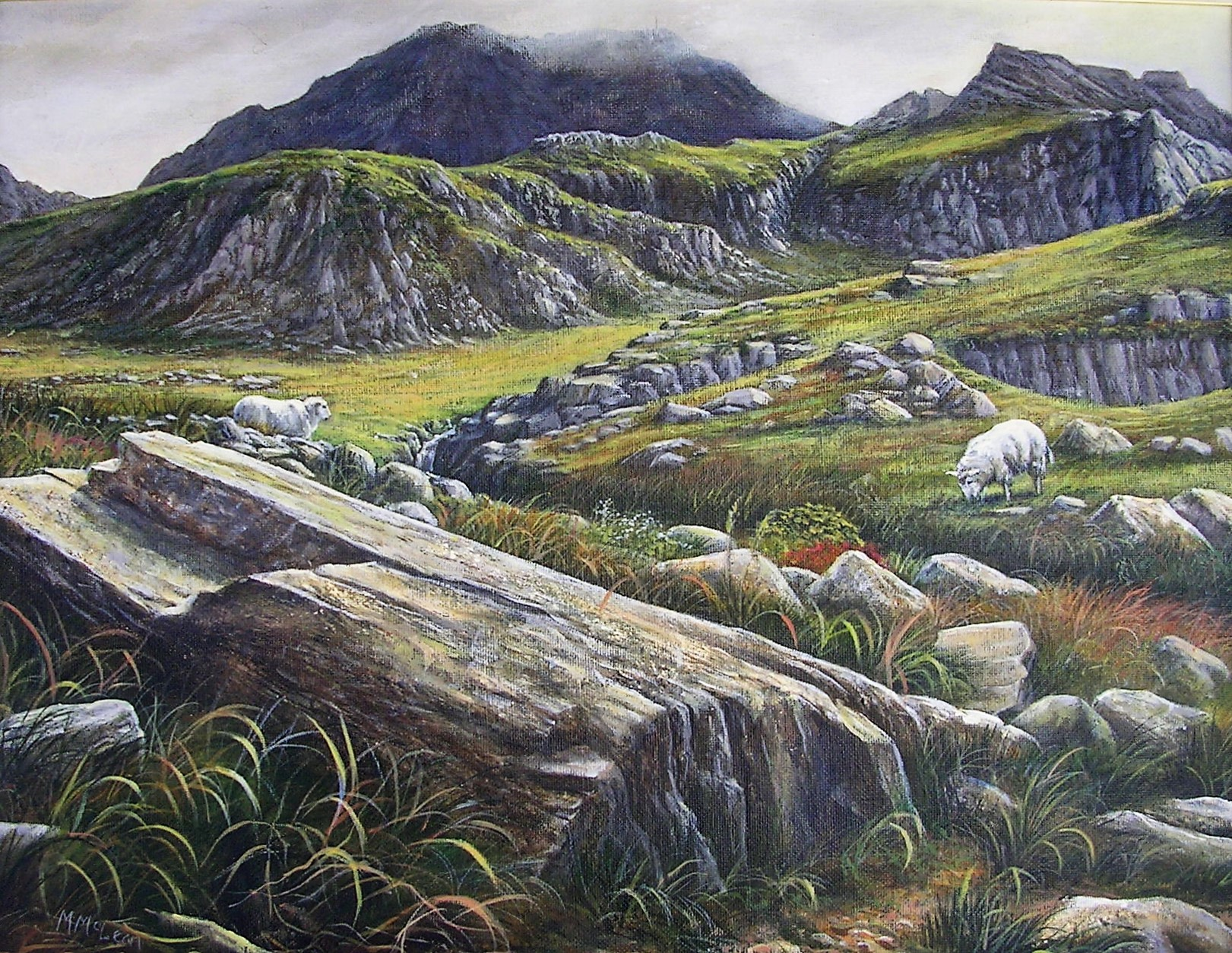 Sheep Near Tryfan