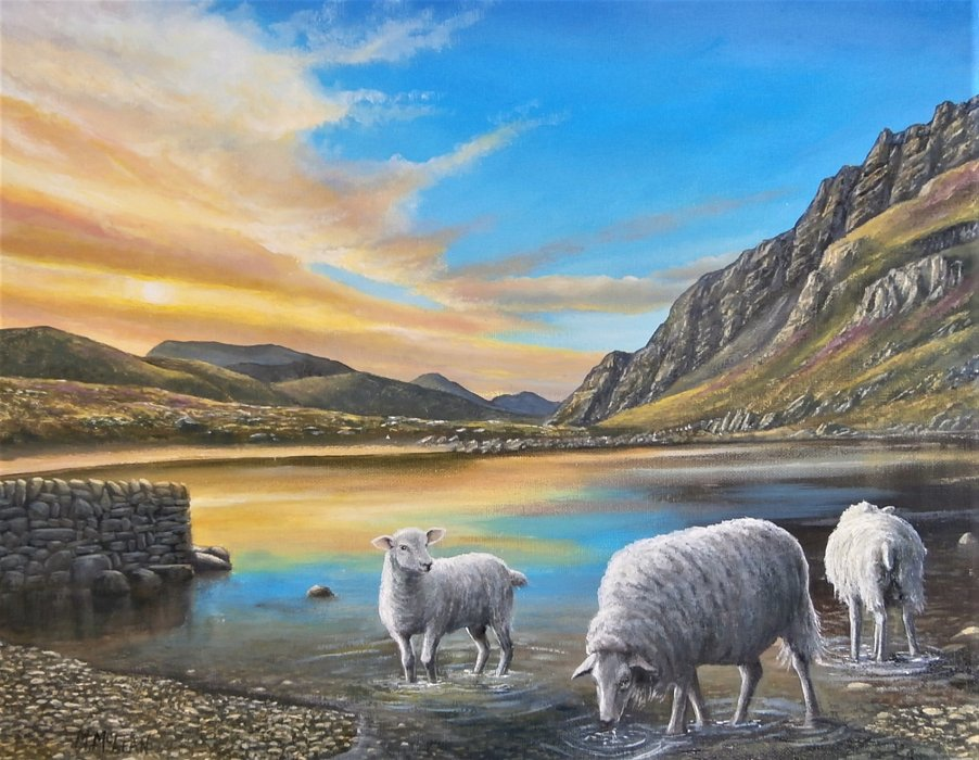 Sheep Drinking At Cwm Idwal